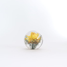 Landscape Products - HAFOD GRANGE - PAPERWEIGHT S #YELLOW HELICHRYSUM [HGPW1-007]