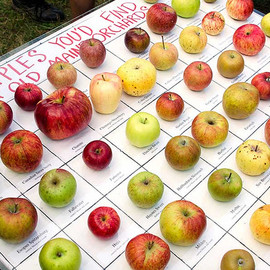 Old Maine Orchards - APPLES