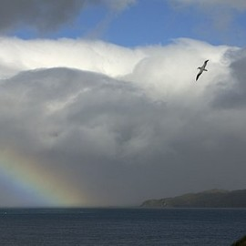 Fine Art America - Rainbow And Wandering Albatross, Prion Canvas Print / Canvas Art - Artist Ralph Lee Hopkins