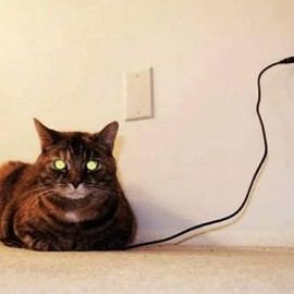 The electric cat - !