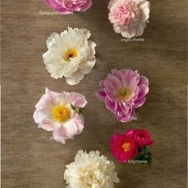 flower - Glossary of Peonies