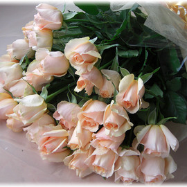Flowers - White,Pink, Roses♡