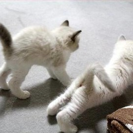 cat_yoga♡pic.