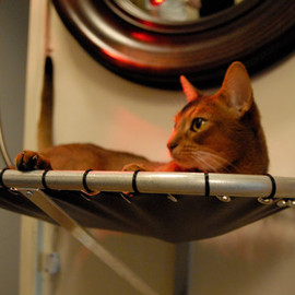 BratCatDesigns - Steel Cat Hammock