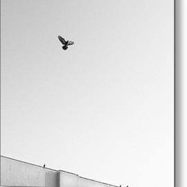 Fine Art America - Birds Flying In The Sky Metal Print By Tontygammy + Images