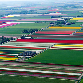 Breathtaking aerial view of tulip fields in the Netherlands