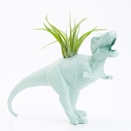boygirltees - Dinosaur Planter and Air Plant Room Decor, College Dorm Ornament, Plants and Edibles