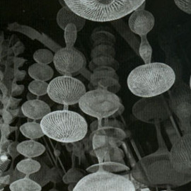 Ruth Asawa - The Wire Sculptures