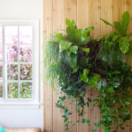 woolly pocket - living wall planter