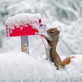 Squirrel - Special Delivery