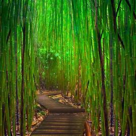 Maui - Hana Highway Bamboo Forest