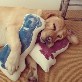 Fauna Labrador Pillow