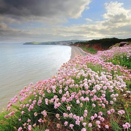 Flowers in Dawlish, Devon, England