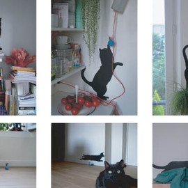 DOMESTIC - Guitou the cat BK