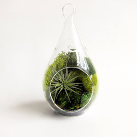 groundlings - Forest Teardrop Small Terrarium with Air Plant