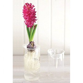 SPICE CO.,LTD. - BULB VASE LONG