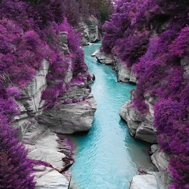 Purple Forest, With A Blue Stream