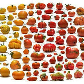 トマト - The spectrum of heirloom tomato varieties