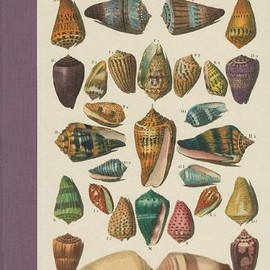 Antione-Joseph Dezallier d'Argenville - Shells - Muscheln - Coquillages: Conchology or the Natural History of Sea, Freshwater, Terrestrial and Fossil Shells 1780
