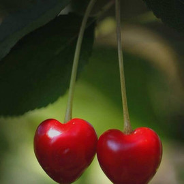 Heart Cherries