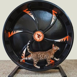 Cat Wheel - Cat Exercise Wheel