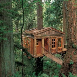Blue Moon Treehouse, Issaquah, Washington - Blue Moon Treehouse, Issaquah, Washington