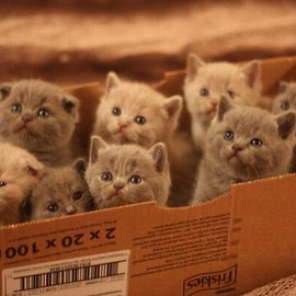 Kittens, in a box