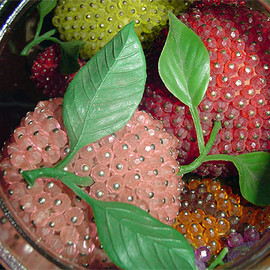 beaded fruit