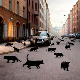 Oslo, Norway - Black Cat Invasion