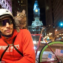 NYC - messenger & cat
