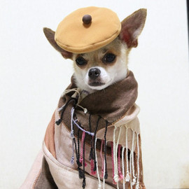 The Best Dressed Dog