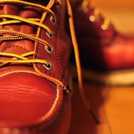 RED WING - Irish Setter