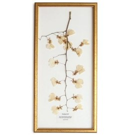 PLACER WORKSHOP - Dried Orchids Frame