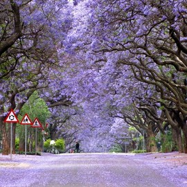 South Africa - Marais Street in Pretoria