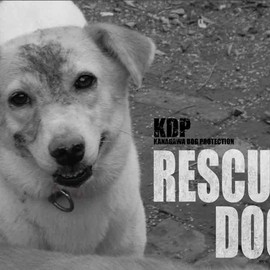 KDP KANAGAWA DOG PROTECTION - RESCUED DOGS Calendar 2015