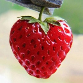 no brand - this is strawberry heart to come true your love.