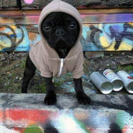 American Apparel - Flex Fleece Dog Zip Hoody