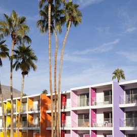MilkWeed: Color Fields - The Landscape of the Saguaro Palm Springs