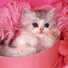 so cute cat