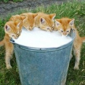 Kittens at the milk pail♡