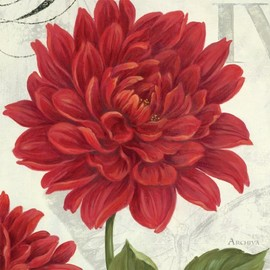 InGallery.com - Etude En Rouge Dahlia by Archiva Fine Art Canvas 35 x 35 in Gallery Wrap Wall Decor