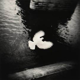 Michael Kenna - White Bird Frying, Paris, France