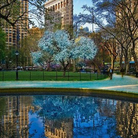 Madison Square Park in NYC