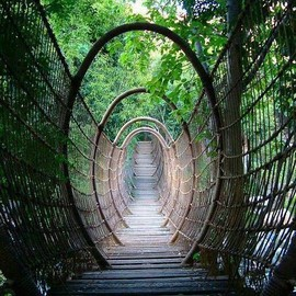 South Africa - The Spider Bridge