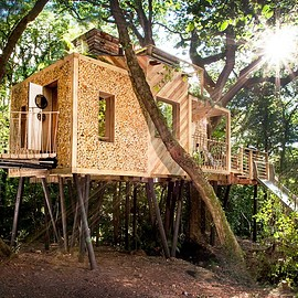 Dorset woodland, a few hours west of London - Luxury camping - including in The Woodman's Treehouse