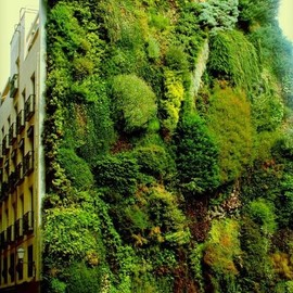 Madrid Spain - Vertical Garden