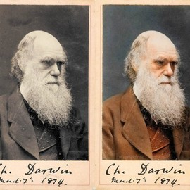 Darwin - Darwin Color Photo