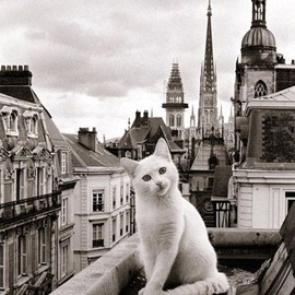 Parisian Kitty