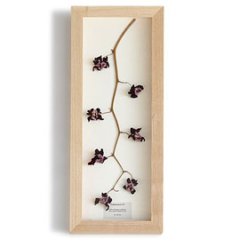 PLACER WORKSHOP - Dried Orchids Frame Phalaenopsis S.P.
