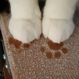 kitty's footprints ♡
